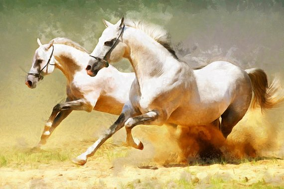 Two Beautiful Horse Portrait In Motion. Black And White Horses ... | 380x570