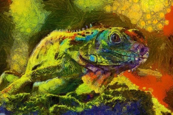 Chameleon Canvas Print 20*30 Inch HUGE !